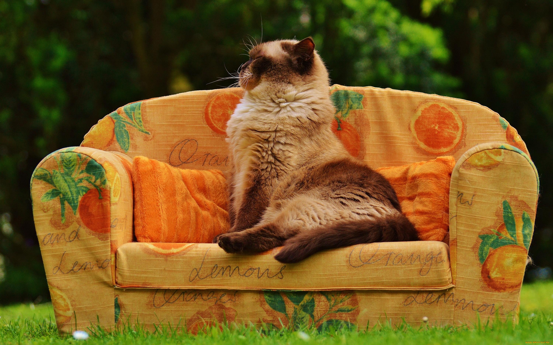 Коты на диване картинки